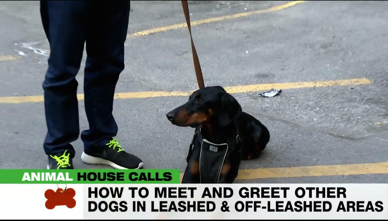 Athena on Animal House Calls