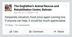 bahrain dog shelter