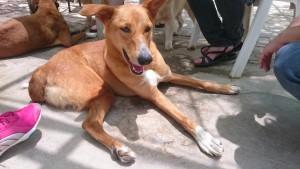 Bahrain rescue dogs