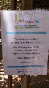 bahrain dog shelter