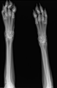 First round of x-rays