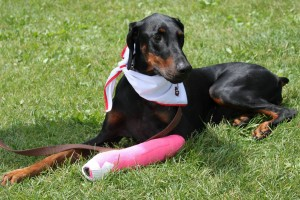 st. john's ambulance service dog
