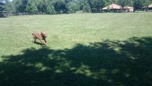 CBSA dog