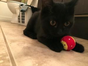 black rescue kitten