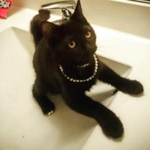 black foster kitten