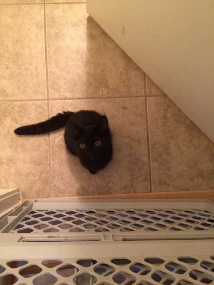 Meow! - photo cred: Vanessa Lorenzon