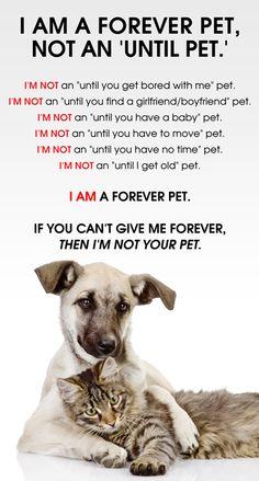 forever pet