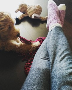 Pints, the golden doodle puppy, sweat pants, and fuzzy socks; how I start my average day.
