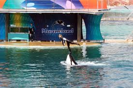 Everyone Loves Marineland.