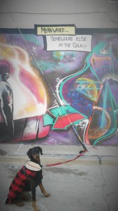 doberman and galaxy graffiti