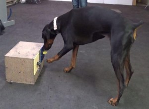 Athena canine cognition