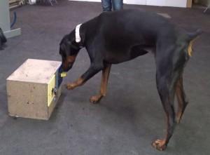 dog cognition box at u of t