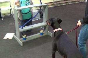 dog cognition test at u of t
