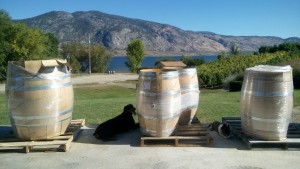 Dogs at LaStella Winery in Osoyoos