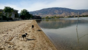 dogs in Osoyoos